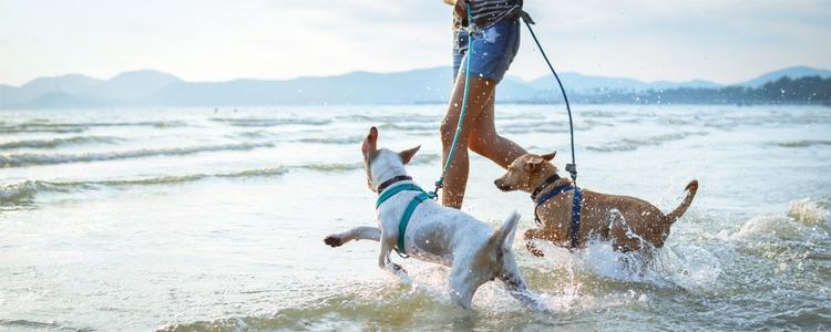 Eight Activities To Do With Your Pet This Summer While Social Distancing