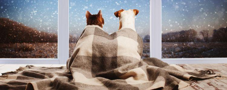 Four Winter Safety Habits for Pet Owners